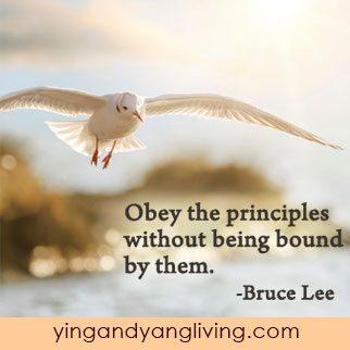 Bird-Flying-Free---Bruce-LeeYY