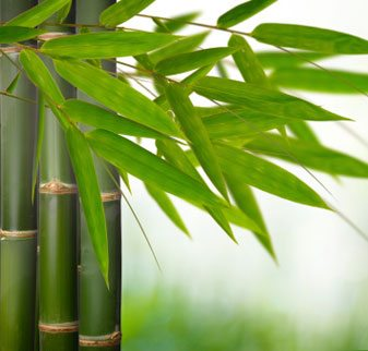Bamboo for your Beauty Routine