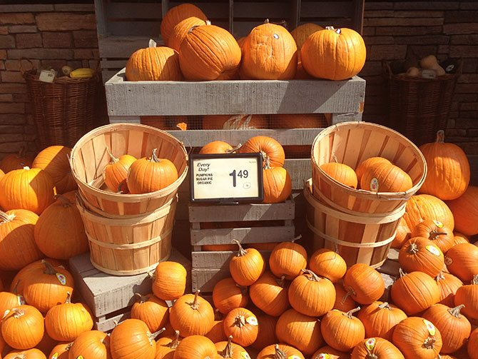 Pumpkins607X503