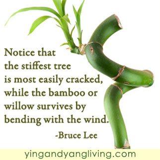 Bamboo-Tree---Bruce-LeeYY