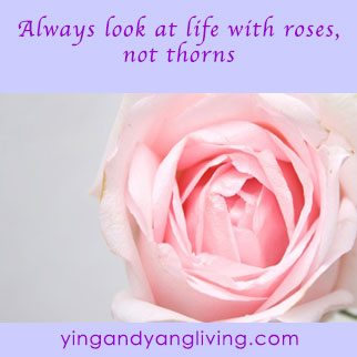 Zen Message: Pink Rose – Look at Life with Rose