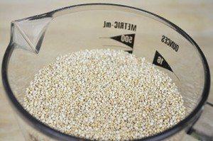 Quinoa-Ingredient