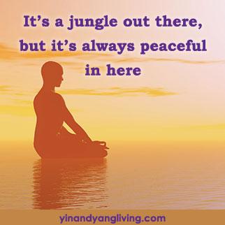 OM Message: Jungle Outside, Peaceful Inside