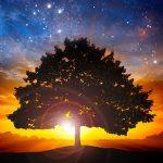 Guided Meditation for Stillness